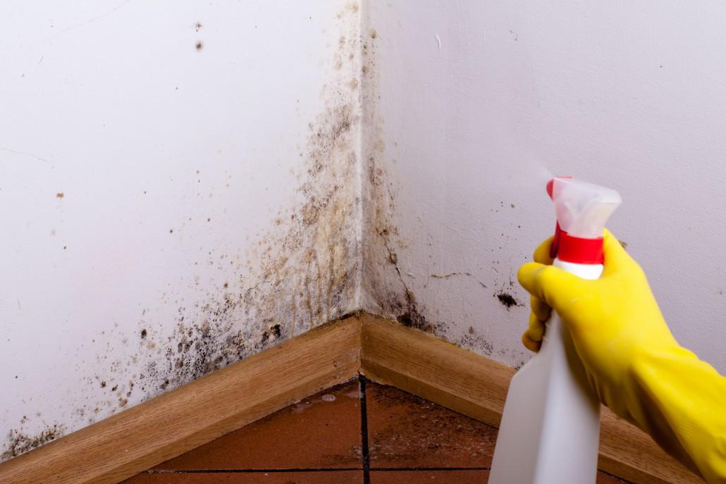 Vlhkost v domě: jak postupovat při odstraňování plísní ze stěn